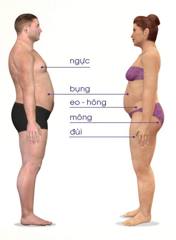 Có mấy loại mỡ - Vị trí và Sự phân bổ mỡ trắng trên cơ thể Nam và Nữ giới