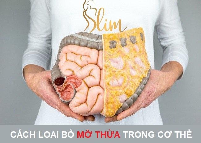 Có mấy loại mỡ? Các loại bỏ mỡ thừa trong cơ thể hiệu quả và thời gian ngắn nhất