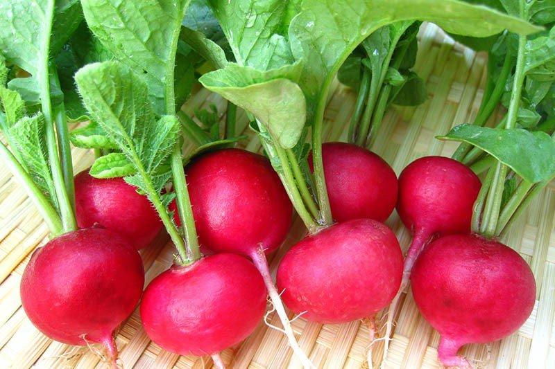 Thực phẩm ít calo - Củ cải đỏ hỗ trợ giảm cân giữ dáng hiệu quả